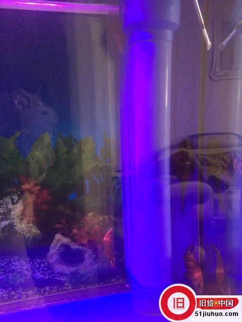 便宜出售:全新森森鱼缸低价处理,送鱼送全套设备!